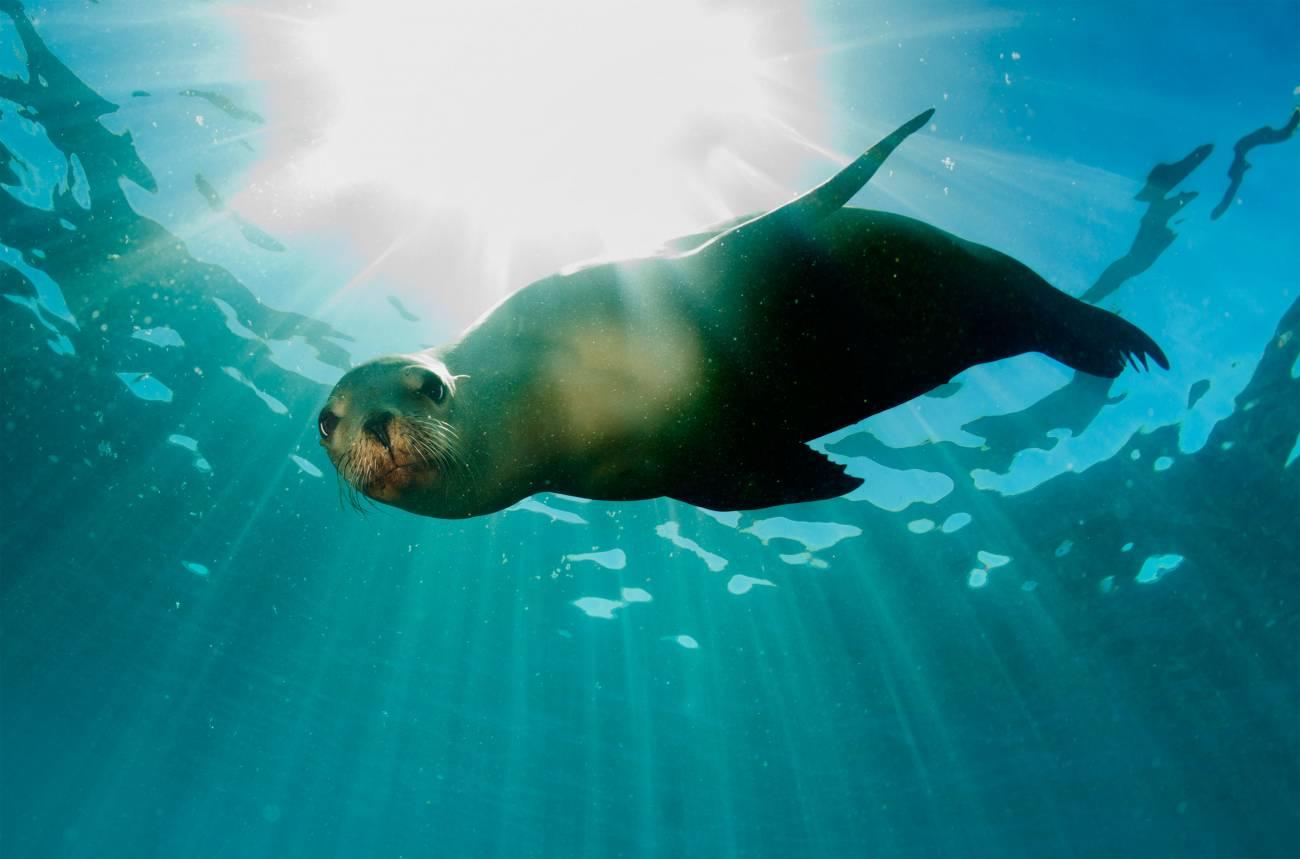 mejores sitios para hacer snorkel - ecuador