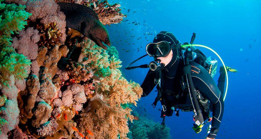 recreational diving - main