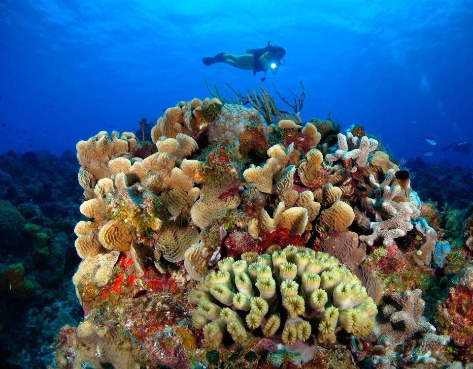 scuba diving light night dive - main picture