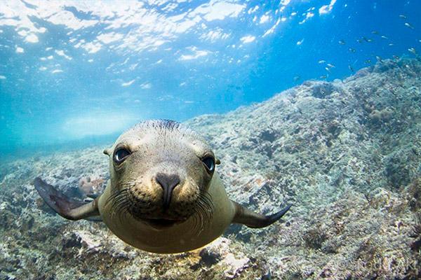 ocorro liveaboard diving - foquita